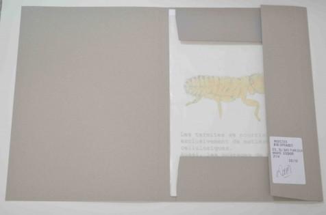 """Portfolio """"Insectes bibliophages"""""""